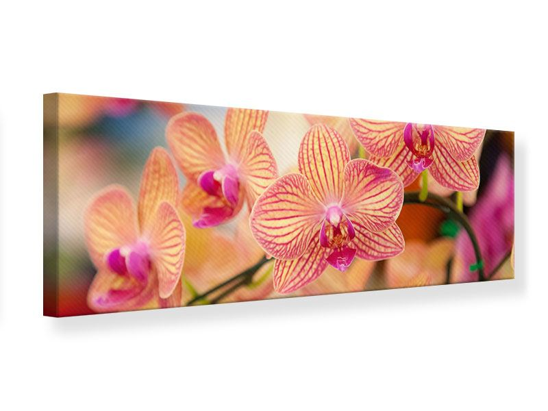 Leinwandbild Panorama Exotische Orchideen