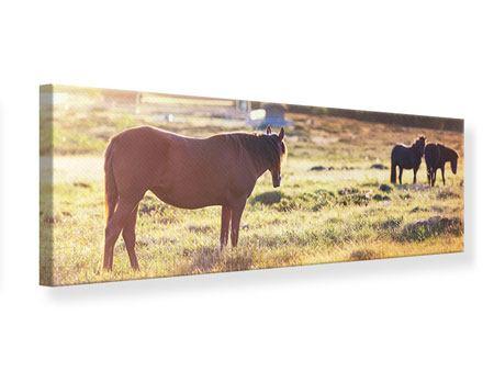 Leinwandbild Panorama Wilde Pferde