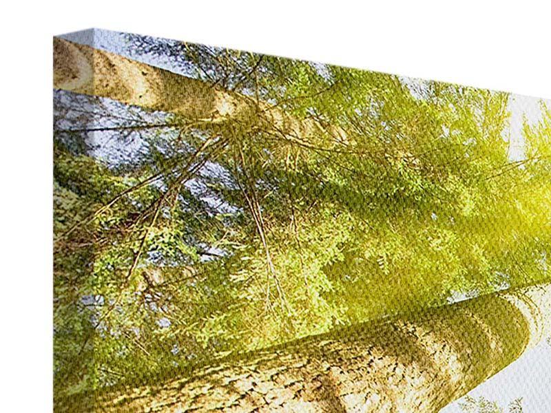 Leinwandbild Panorama Baumkronen in der Sonne