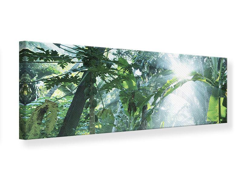 Leinwandbild Panorama Dschungelstar