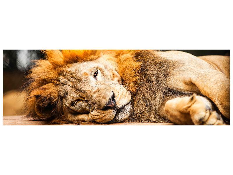 Leinwandbild Panorama Entspannter Löwe