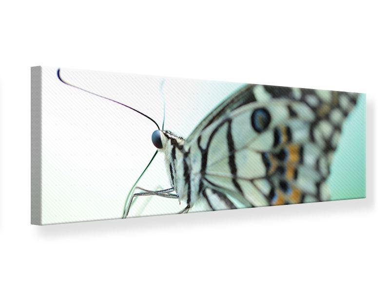 Leinwandbild Panorama Schmetterling XXL