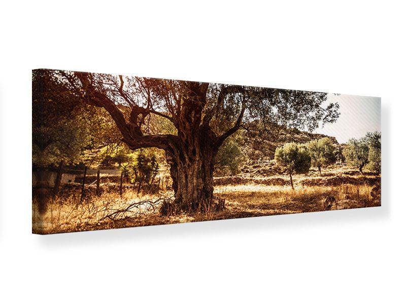Leinwandbild Panorama Olivenhain