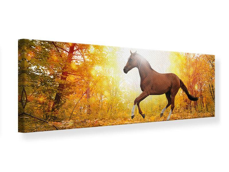 Leinwandbild Panorama Vollblut im Herbstwald