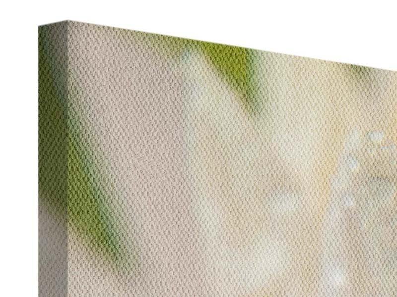 Leinwandbild Panorama Close Up Seerose