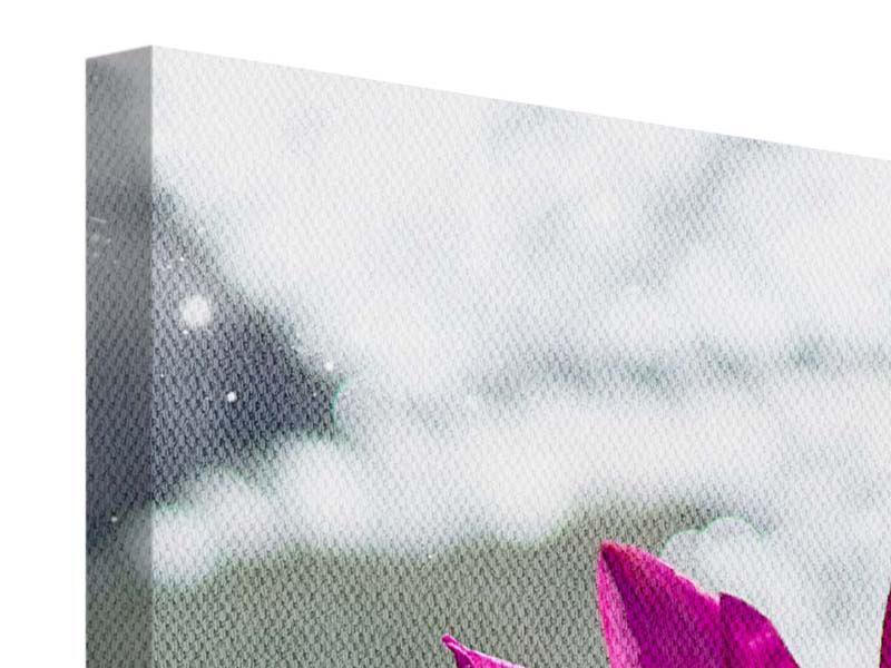 Leinwandbild Panorama Seerosenduo in Pink