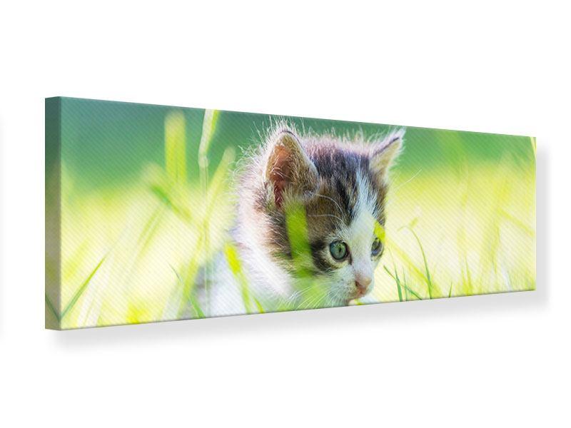 Leinwandbild Panorama Kitten