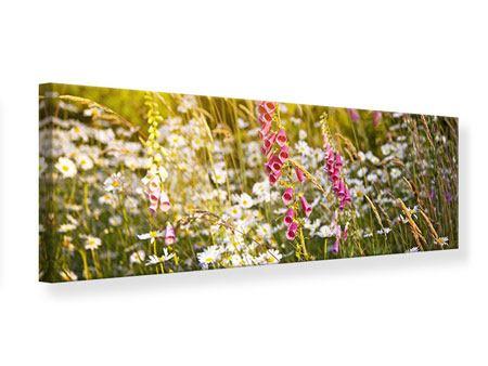 Leinwandbild Panorama Sommerliche Blumenwiese