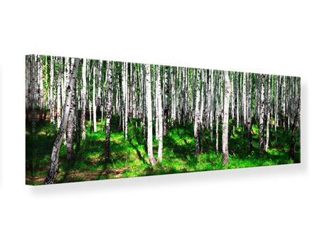 Leinwandbild Panorama Sommerlicher Birkenwald