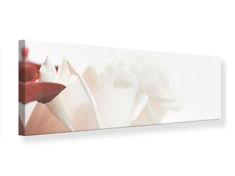 Leinwandbild Panorama Herrliche Rosen