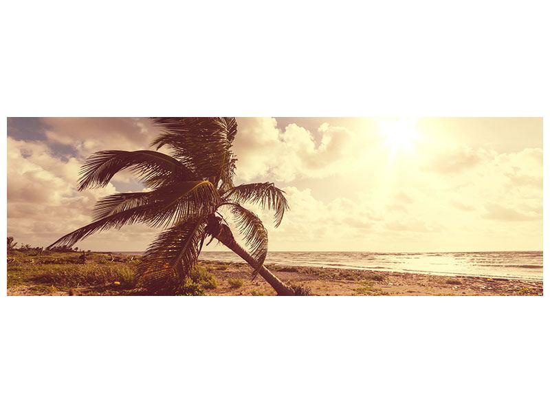 Leinwandbild Panorama Die schiefe Palme