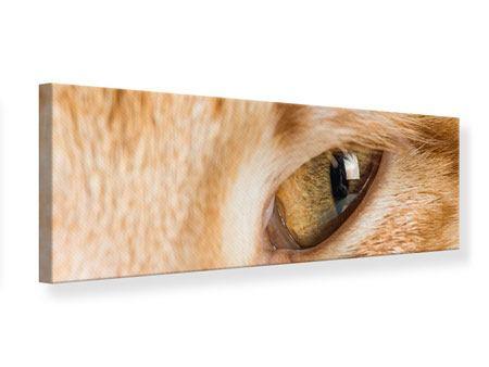 Leinwandbild Panorama Close Up Katze