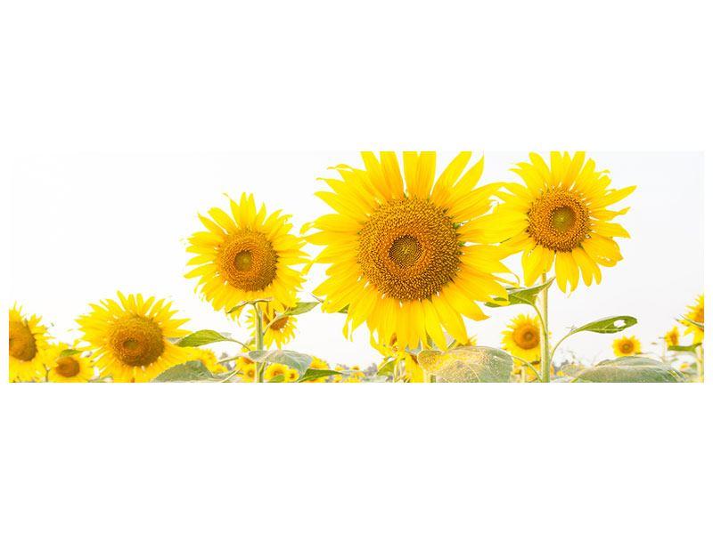 Leinwandbild Panorama Das Sonnenblumenfeld