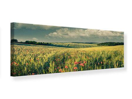 Leinwandbild Panorama Der Mohn im Weizenfeld