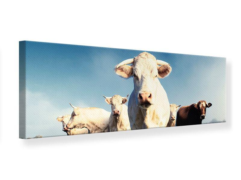Leinwandbild Panorama Kühe