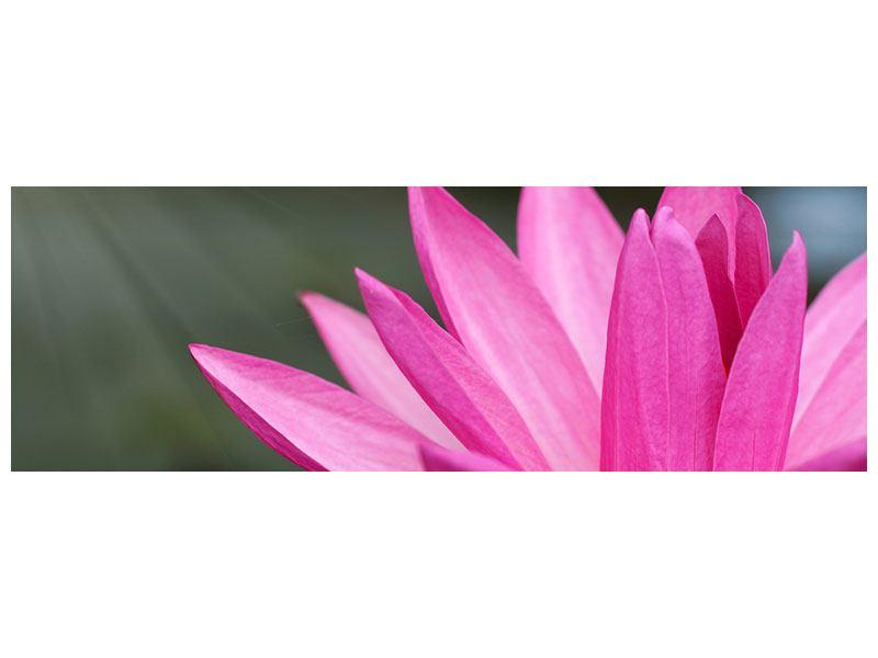Leinwandbild Panorama XXL Seerose in Pink