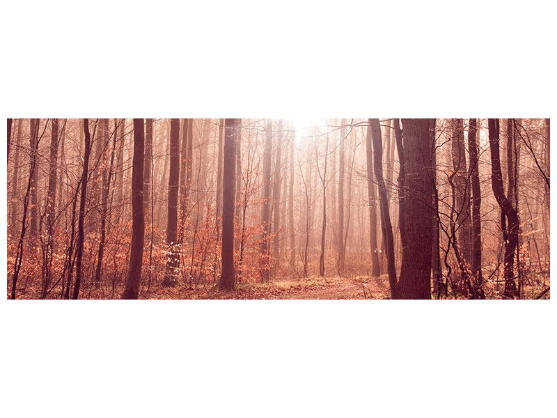 Leinwandbild Panorama Sonnenuntergang im Herbstwald