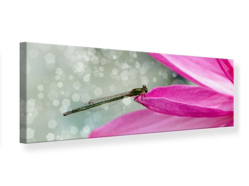 Leinwandbild Panorama Libelle auf dem Seerosenblatt