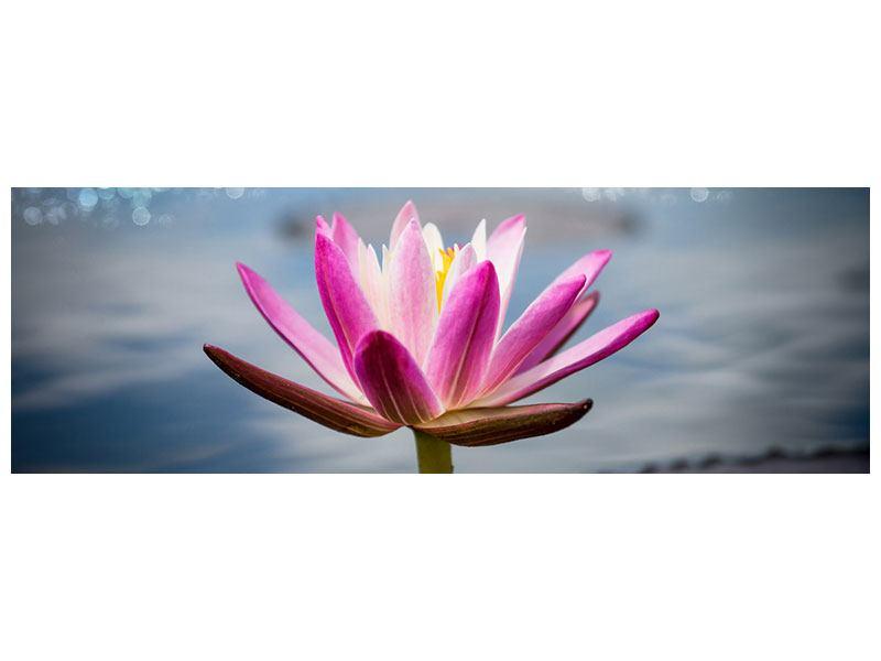 Leinwandbild Panorama Lotus im Morgentau