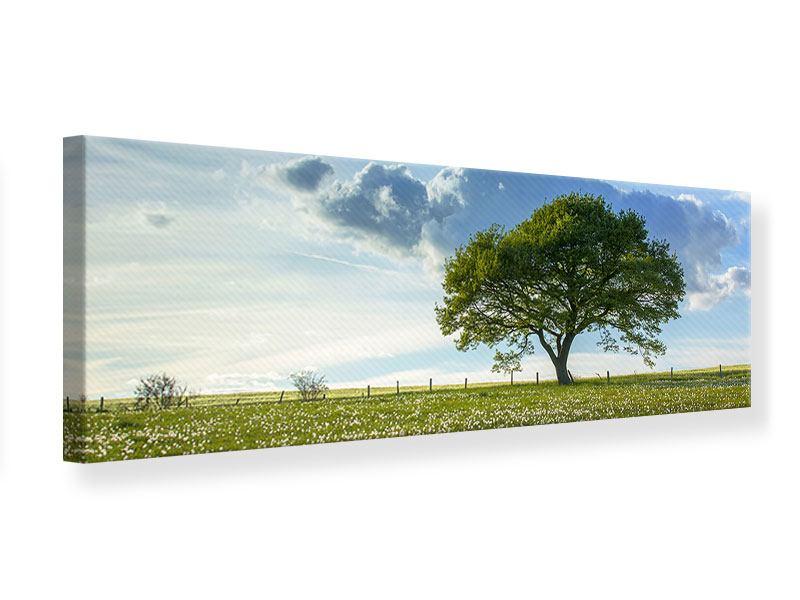 Leinwandbild Panorama Frühlingsbaum