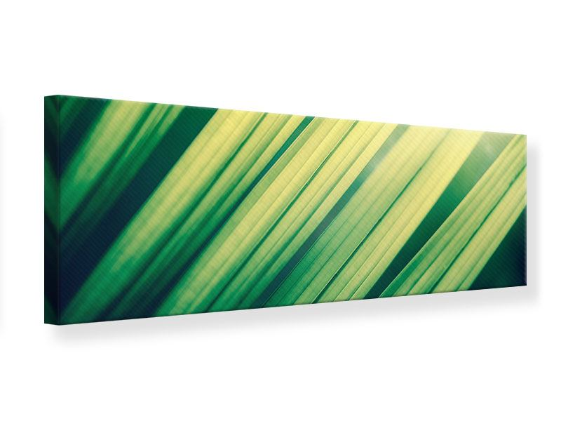 Leinwandbild Panorama Beleuchtetes Palmblatt