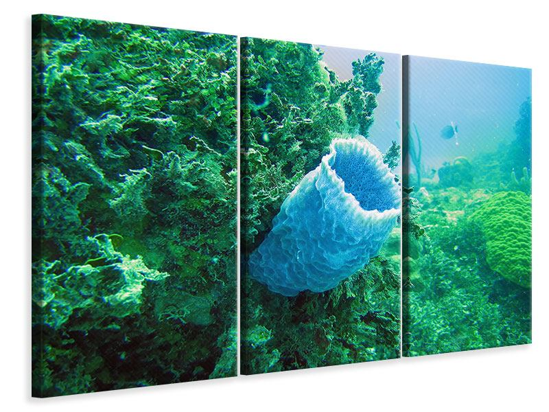 Leinwandbild 3-teilig Korallen