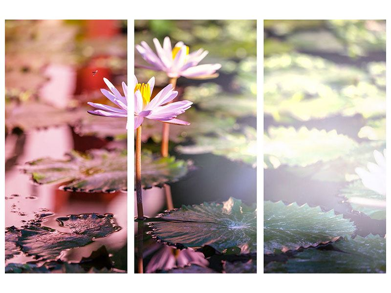 Leinwandbild 3-teilig Seerosen im Teich