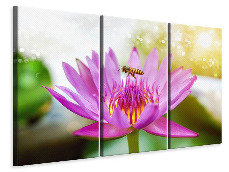 Leinwandbild 3-teilig Die Lotus mit Biene