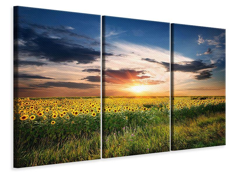 Leinwandbild 3-teilig Ein Feld von Sonnenblumen