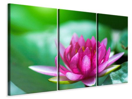 Leinwandbild 3-teilig Lotus in Pink