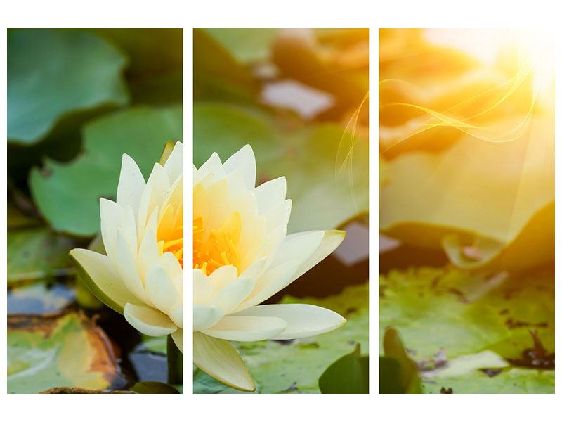 Leinwandbild 3-teilig Romantische Seerose