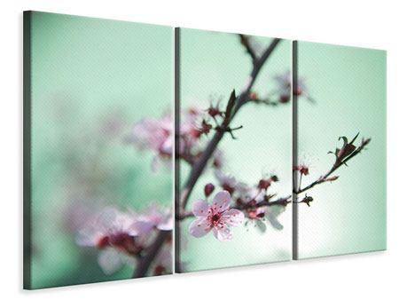 Leinwandbild 3-teilig Die japanische Kirschblüte
