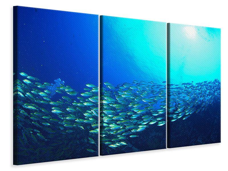 Leinwandbild 3-teilig Fischschwarm