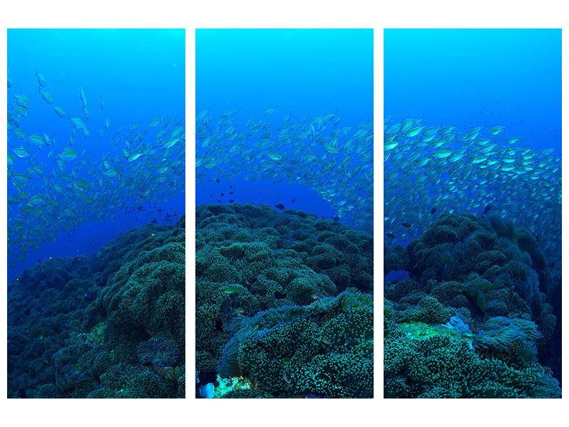 Leinwandbild 3-teilig Fischschwärme