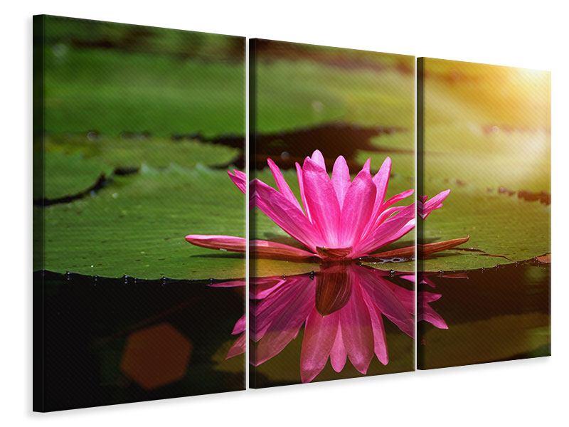 Leinwandbild 3-teilig Lotus im Wasser