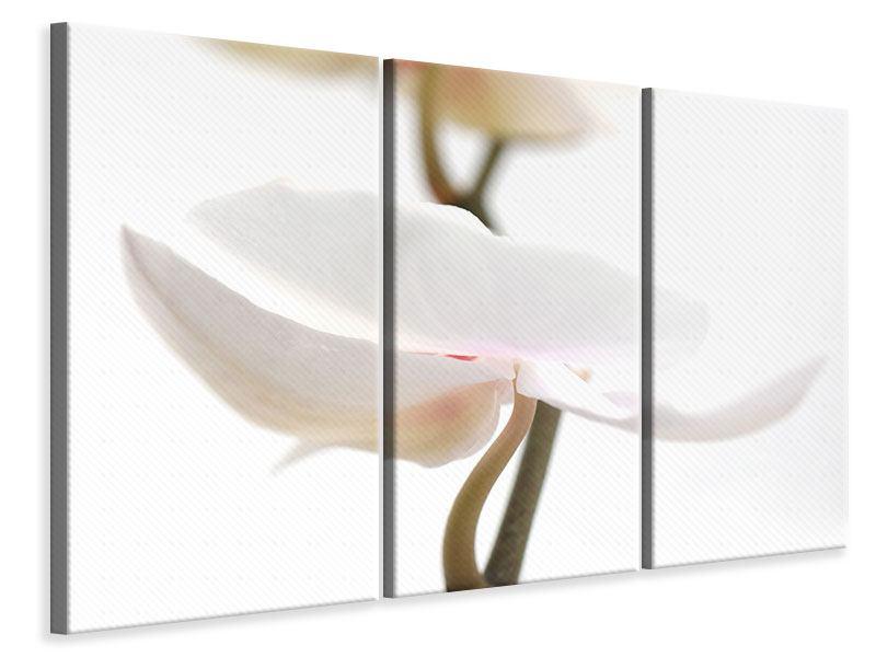 Leinwandbild 3-teilig XXL Orchideenblüte