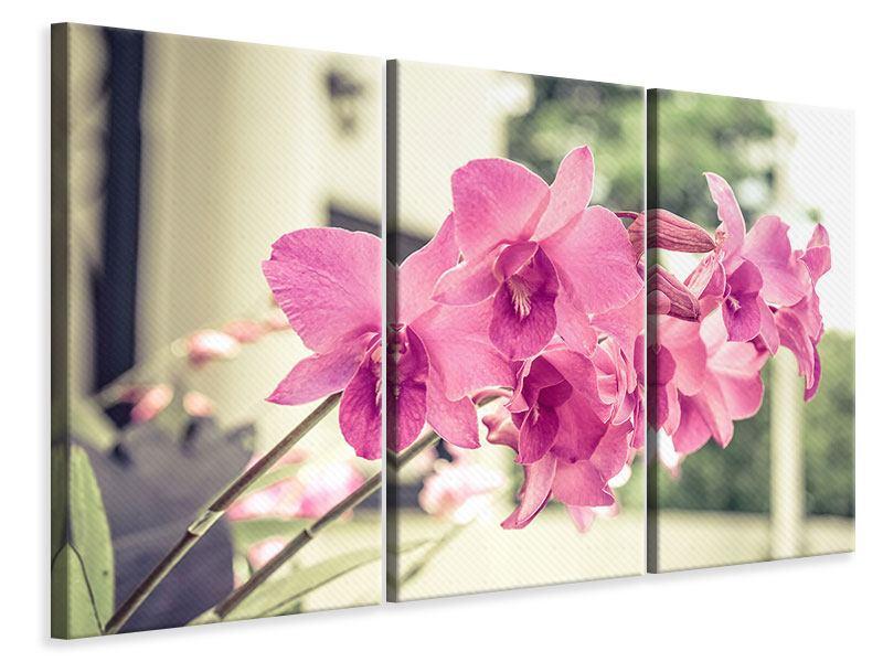 Leinwandbild 3-teilig Ein Fensterplatz für die Orchideen