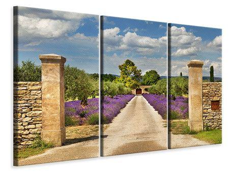 Leinwandbild 3-teilig Lavendel-Garten