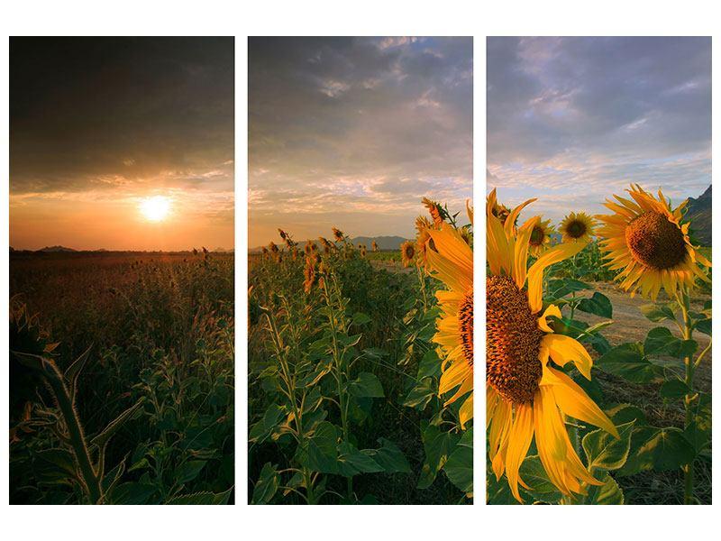 Leinwandbild 3-teilig Sonnenblumen im Lichtspiel