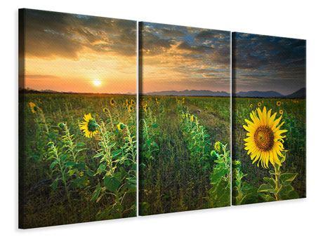 Leinwandbild 3-teilig Sonnenblumenfeld im Abendrot