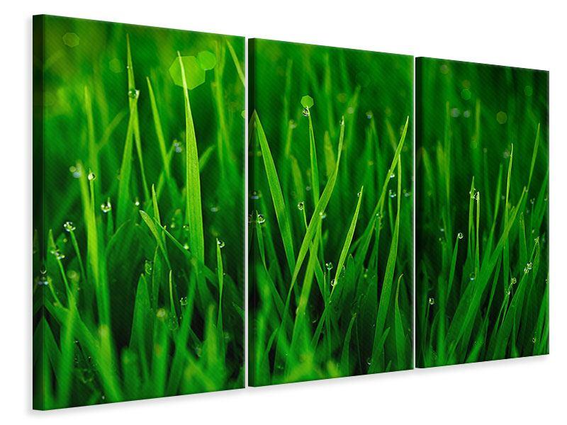 Leinwandbild 3-teilig Gras mit Morgentau