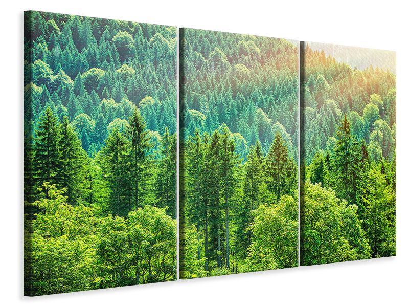 Leinwandbild 3-teilig Der Waldhügel