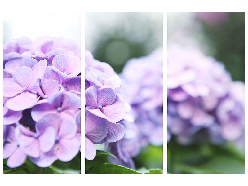 Leinwandbild 3-teilig Hortensien