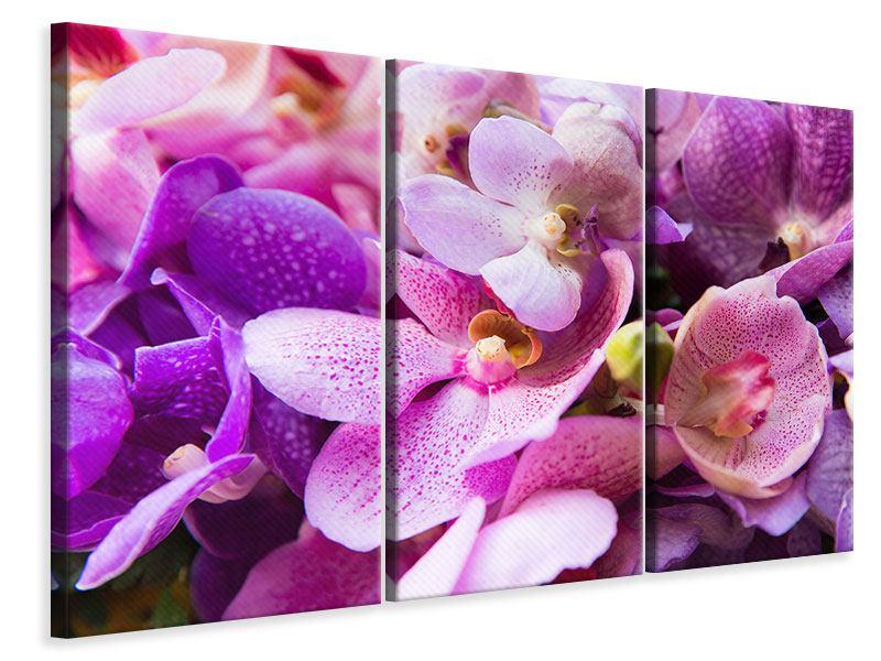 Leinwandbild 3-teilig Im Orchideenparadies