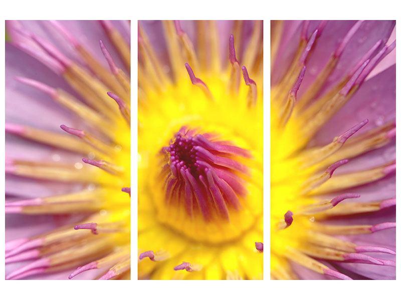 Leinwandbild 3-teilig XXL-Lotus