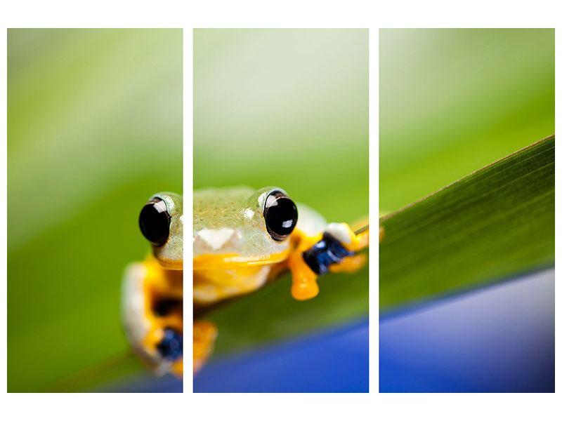 Leinwandbild 3-teilig Frosch XXL