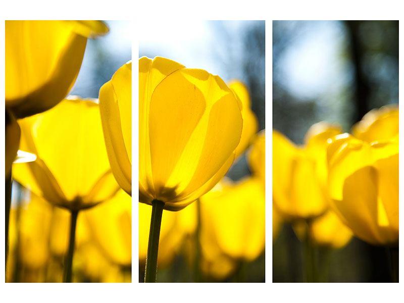 Leinwandbild 3-teilig Gelbe Tulpen in XXL