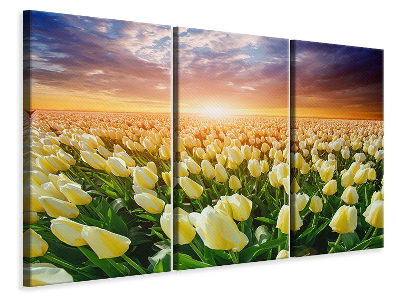 Leinwandbild 3-teilig Sonnenaufgang bei den Tulpen