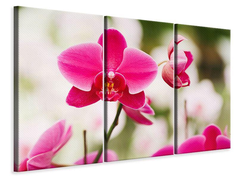 Leinwandbild 3-teilig Perspektivische Orchideen