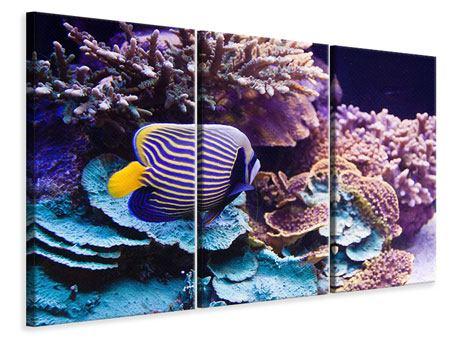 Leinwandbild 3-teilig Faszination Unterwasser